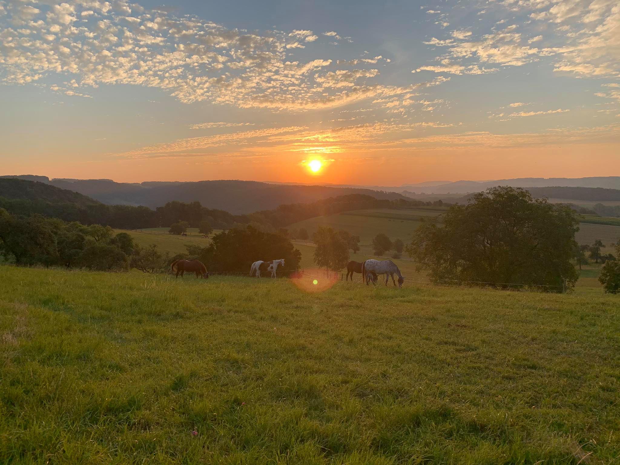 Abendstimmung auf der Wide Field Ranch in Breitenfeld