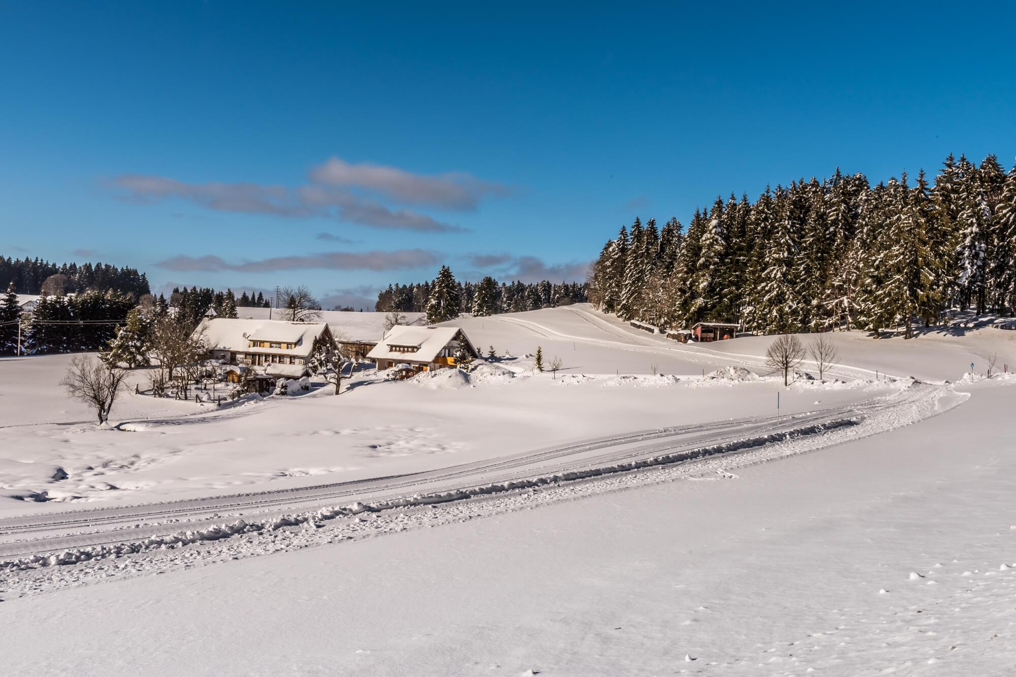 Schnee, Langlaufski, Langlauf, Sport, Wintersport, Baum, Loipe, Herrischried, Winter, Winterurlaub, Ferienwelt, Südschwarzwald, Schwarzwald
